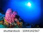 underwater world landscape | Shutterstock . vector #1044142567