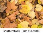 background group autumn orange...   Shutterstock . vector #1044164083