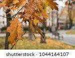 autumn leaves on the pedestrian ...   Shutterstock . vector #1044164107