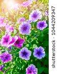 summery flower purple and pink...   Shutterstock . vector #1044209347