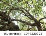 banyan tree branches | Shutterstock . vector #1044220723