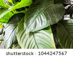 green leafs  plant in nature...   Shutterstock . vector #1044247567