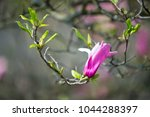 magnolia flower on tree branch... | Shutterstock . vector #1044288397