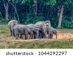 asian elephant or elephas... | Shutterstock . vector #1044292297