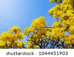 fresh natural flower in bright... | Shutterstock . vector #1044451903