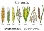 Cereals Hand Drawn Illustratio...
