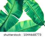 tropical banana palm leaf... | Shutterstock . vector #1044668773