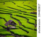 Green Terraced Rice Field In...