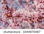 pink cherry blossom  japanese... | Shutterstock . vector #1044870487
