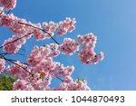 pink cherry blossom  japanese... | Shutterstock . vector #1044870493