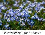 ordinary star hyacinth ... | Shutterstock . vector #1044873997