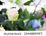 close up and soft focus of pink ... | Shutterstock . vector #1044889597