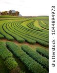 Small photo of Highland tea plantation formed a beautiful graphical form and lines