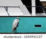 great white egret  common egret ... | Shutterstock . vector #1044941137