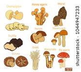 set of hand drawn mushroom | Shutterstock .eps vector #1044947233