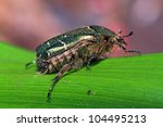 cockchafer on green sheet | Shutterstock . vector #104495213
