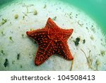 Red starfish in its natural habitat in tropical ocean - stock photo