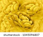 floral light yellow background. ... | Shutterstock . vector #1045096807