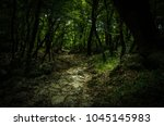 Stone Path In A Dense Thick...