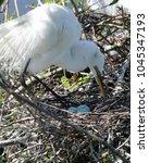 egret standing watch over three ...   Shutterstock . vector #1045347193