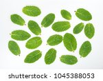 mint leaves on a white top view | Shutterstock . vector #1045388053