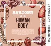 human body anatomy sketch...   Shutterstock .eps vector #1045402387