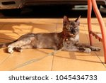 cat on floor | Shutterstock . vector #1045434733