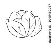 white cabbage vector line icon... | Shutterstock .eps vector #1045492087
