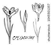 botanica crocus vector black... | Shutterstock .eps vector #1045501357