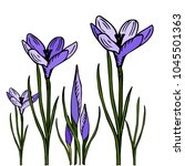 crocuses vector illustration of ... | Shutterstock .eps vector #1045501363