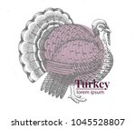 vector hand drawn turkey... | Shutterstock .eps vector #1045528807