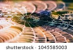 close up of spider sitting on ... | Shutterstock . vector #1045585003