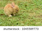 cute rabbit  brown and white...   Shutterstock . vector #1045589773
