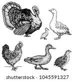 Vector Illustration Set Poultr...