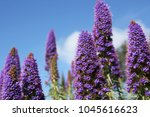 purple lupins with a blue sky... | Shutterstock . vector #1045616623