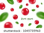 background of the cranberries... | Shutterstock .eps vector #1045735963