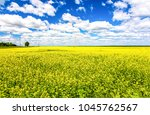 summer yellow flowers field... | Shutterstock . vector #1045762567