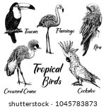 Stock vector set of hand drawn sketch style tropical birds isolated on white background vector illustration 1045783873