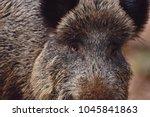 detail of the wild boar  sus... | Shutterstock . vector #1045841863