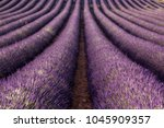 lavender fields in provence in...   Shutterstock . vector #1045909357