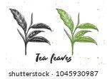 vector engraved style... | Shutterstock .eps vector #1045930987