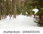 winter landscape with pine... | Shutterstock . vector #1046033143