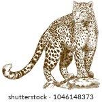 vector antique engraving... | Shutterstock .eps vector #1046148373