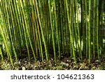 Bamboo Stalks In Forest