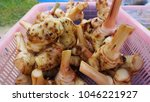 fresh galangal from market in...   Shutterstock . vector #1046221927