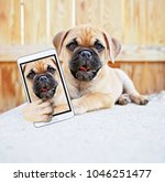 cute chihuahua pug mix puppy ... | Shutterstock . vector #1046251477