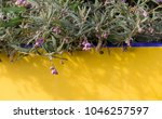 dainty mauve blooms of... | Shutterstock . vector #1046257597