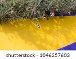 dainty mauve blooms of... | Shutterstock . vector #1046257603