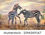 zebra. wild animals on the... | Shutterstock . vector #1046369167