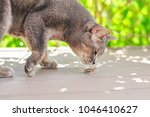 the cat sniffs the creeping may ... | Shutterstock . vector #1046410627